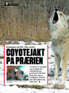 Norway publication of coyote hunting at rolling plains adventures